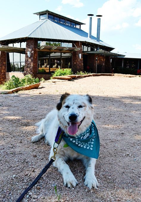 A Texas-sized welcome is waiting for you and your dog when you two-step into the Lone Star State.