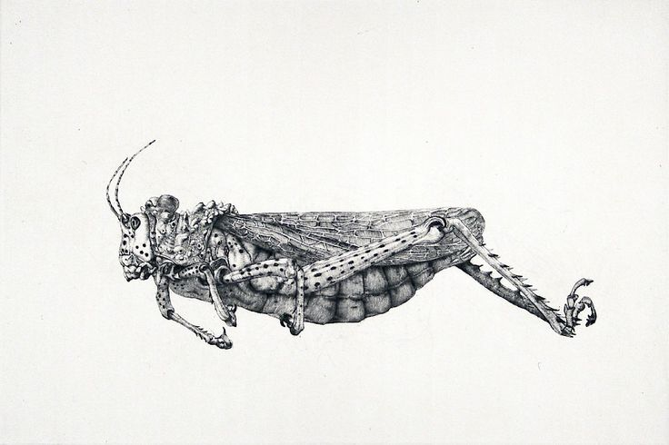 Arne Bendik Sjur : Grasshopper (34236), 2006 at Davidson Galleries