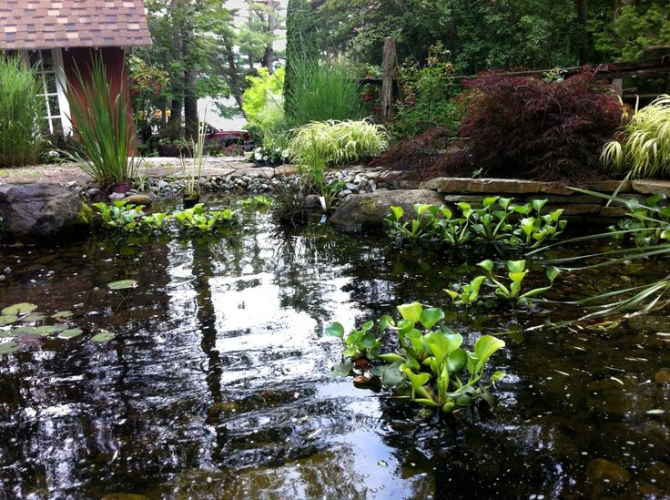 Artificial pond on liner, water garden conception and maintenance - Jardin de Pierre