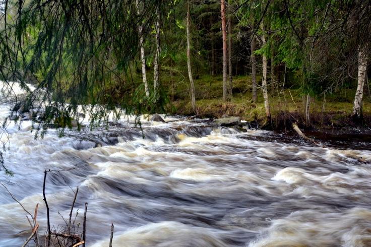 Rutakosken kuohuja Leivonmäen Rutalahdessa.