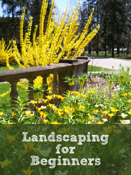 Landscaping Tips for Beginners - Newlywed Survival