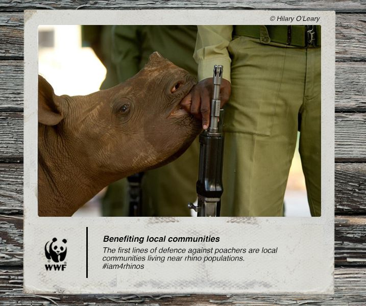 The first lines of defence against poachers are local communities living near rhino populations. #iam4rhinos