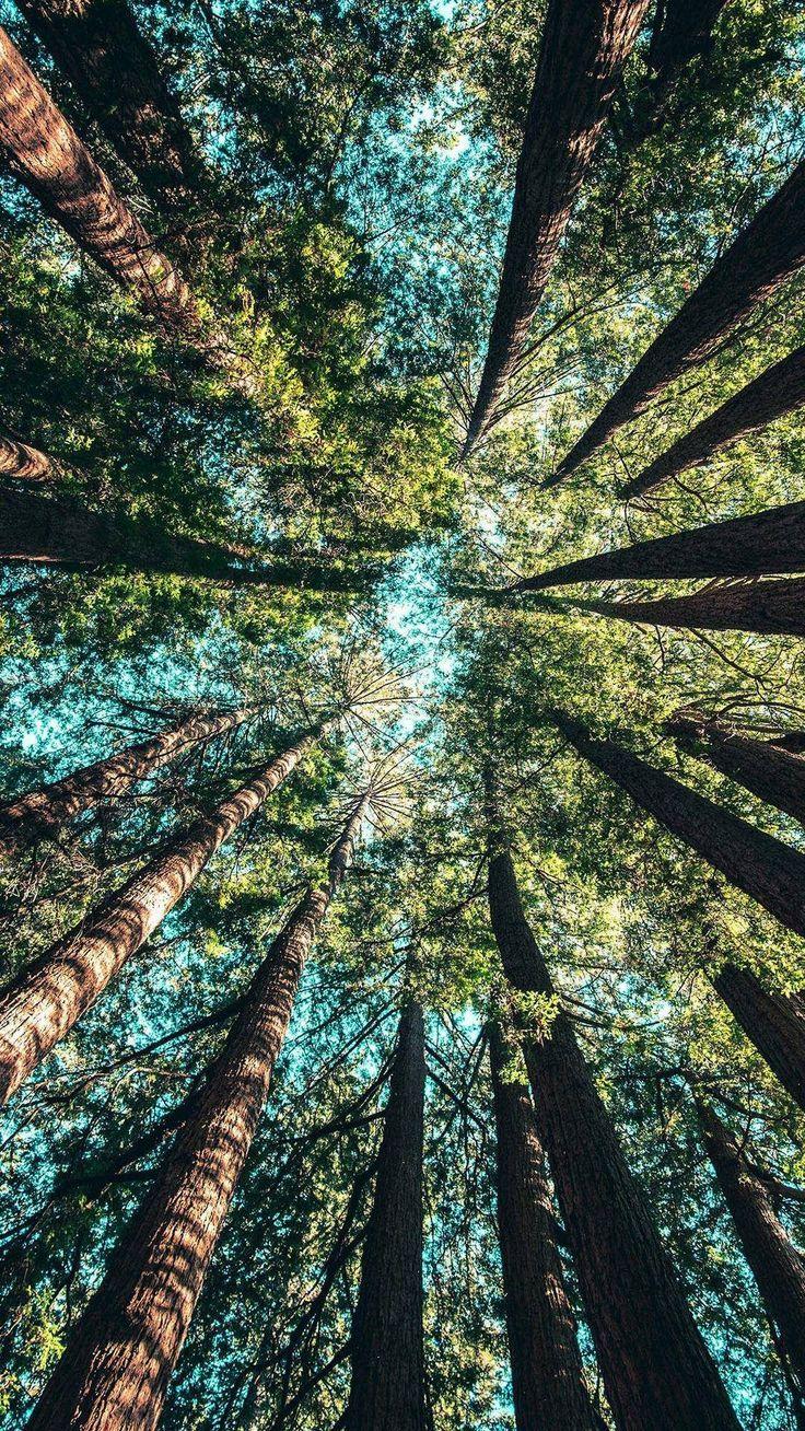 Bemerkenswerte Sicht auf die Natur.