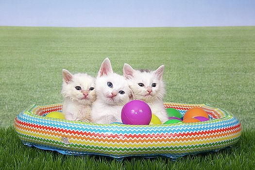 Kitty Backyard Pool Party by Sheila Fitzgerald