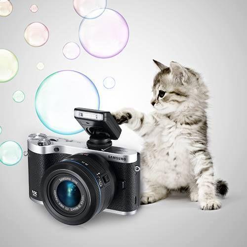 Pozele cu pisici au întotdeauna succes. Mâna sus dacă ați dat cel puțin o dată like unei poze cu pisici