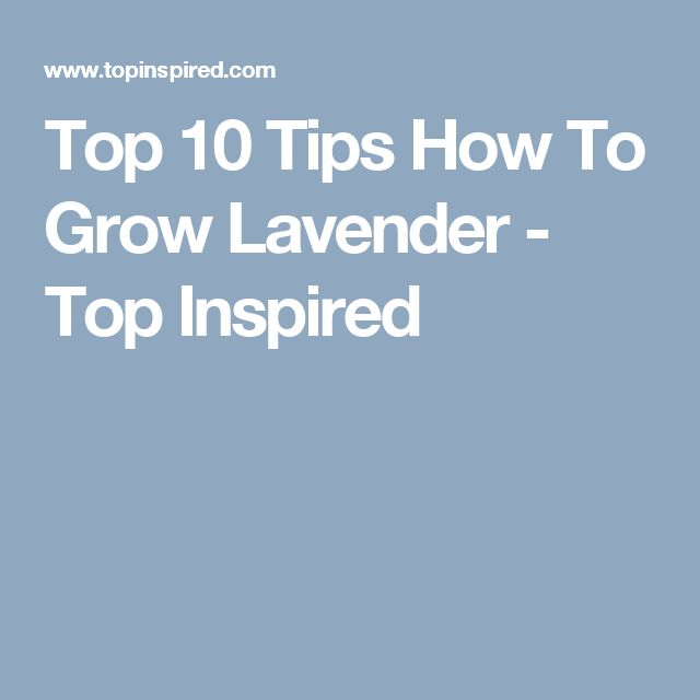 Top 10 Tips How To Grow Lavender - Top Inspired
