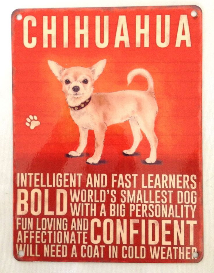 CHIHUAHUA DOG  BREED METAL SIGN ~ NEW