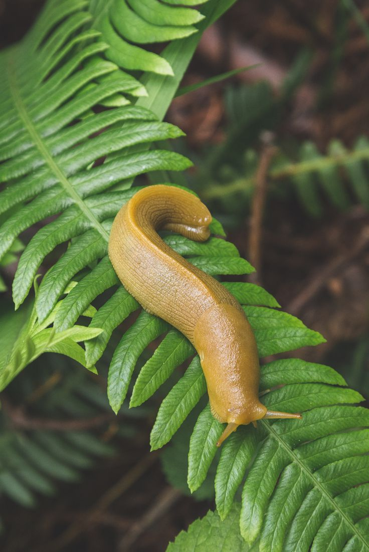 Slug is not very connected to the physical world. Slug may lose part of its body during mating; this is not mourned or missed (it does in fact help slugs in the long run). Slug sheds itself of all material things. Slug eats on the move and shelters wherever there may be shelter.
