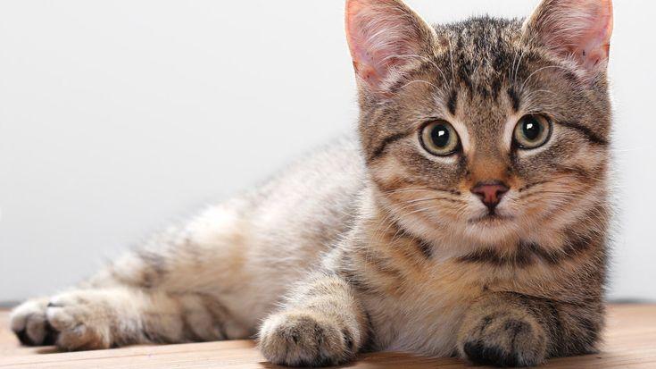 кошка - Поиск в Google