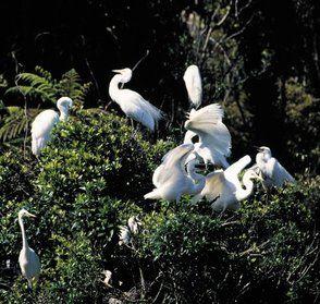 Whataroa Activities - White Heron Sanctuary Tours