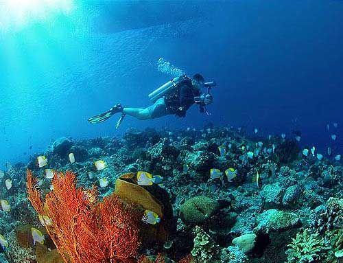 scuuba diving