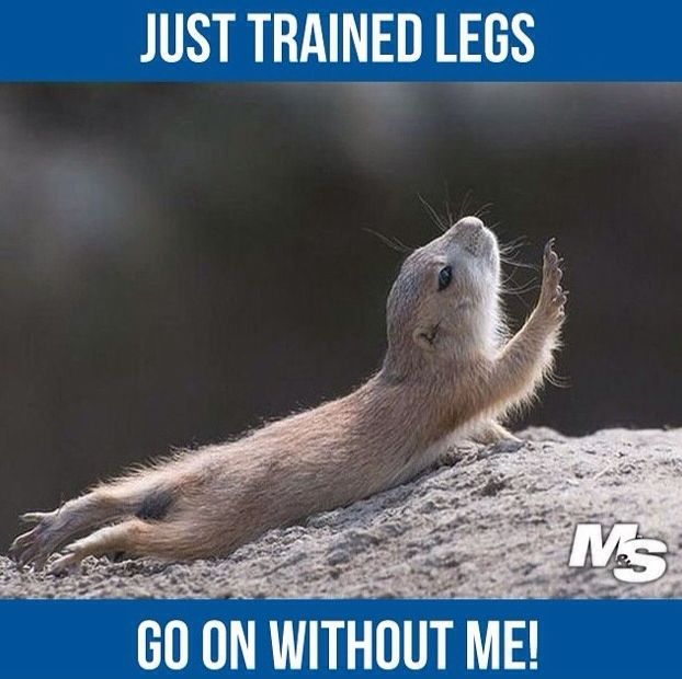 Go on without me! Leg Day | Funny Fitness | Gym Memes | Gym Humour | www.leanerstrongeryou.co.uk