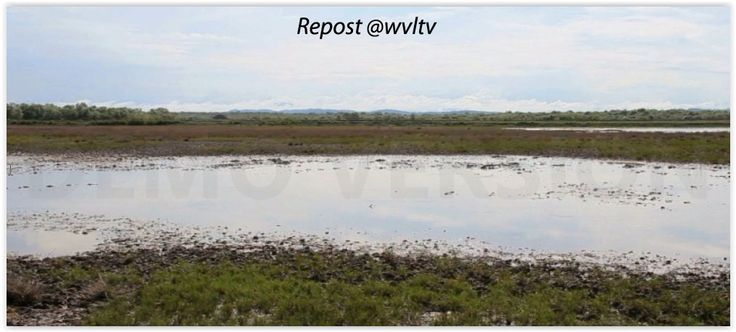 The proposed climate parks are located close to Patehin University's Aquaculture Training and Research Center which is a north-campus of Pathein University in Ayarawaddy Division, in the West of the country.  Read more https://wvltv.wordpress.com/2015/06/10/the-aim-of-the-project/  ADOPT A MANGROVE  http://www.thorheyerdahlclimatepark.org/product/mangrove-tree/