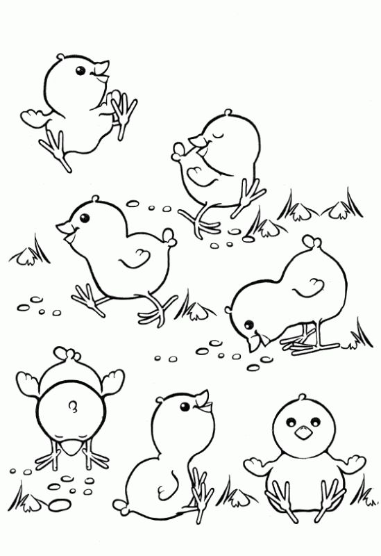 Dibujo de Pollitos. Dibujo para colorear de Pollitos. Dibujos ...