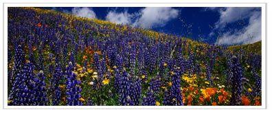 valley-of-flowers.jpg (396×166)