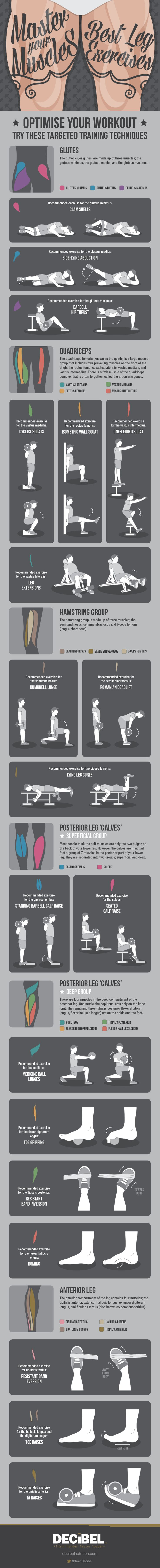 Master Your Muscles: Best Leg Exercises - Imgur