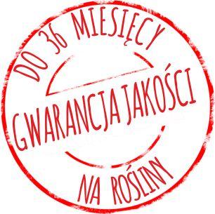 Szkółka drzew i krzewów, rośliny do ogrodu - sklep ogrodniczy online Nordmania.pl