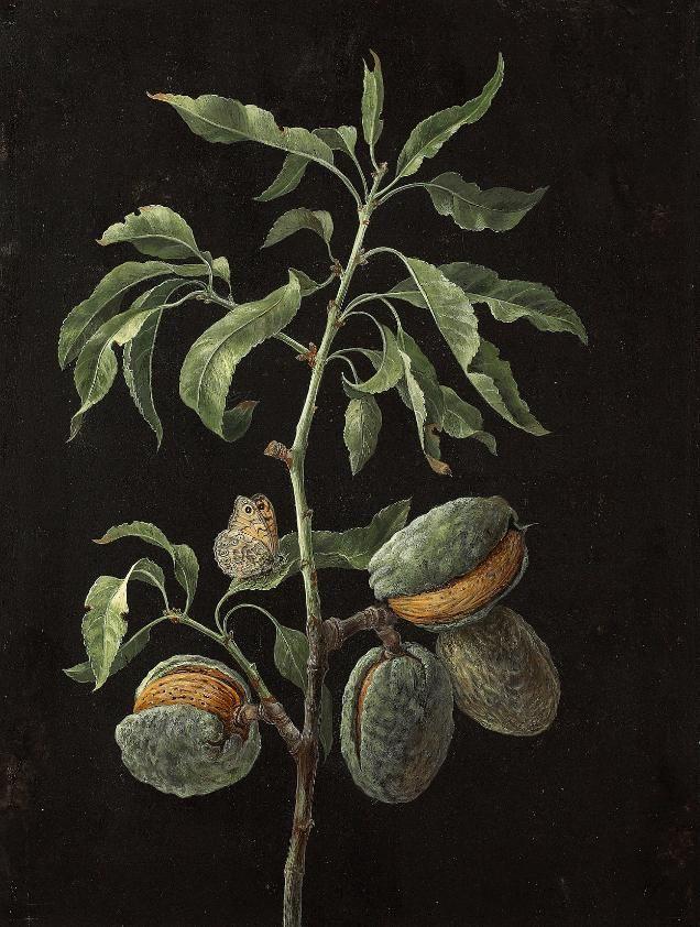 by Barbara Regina Dietzsch (Germany, 1706–1783)