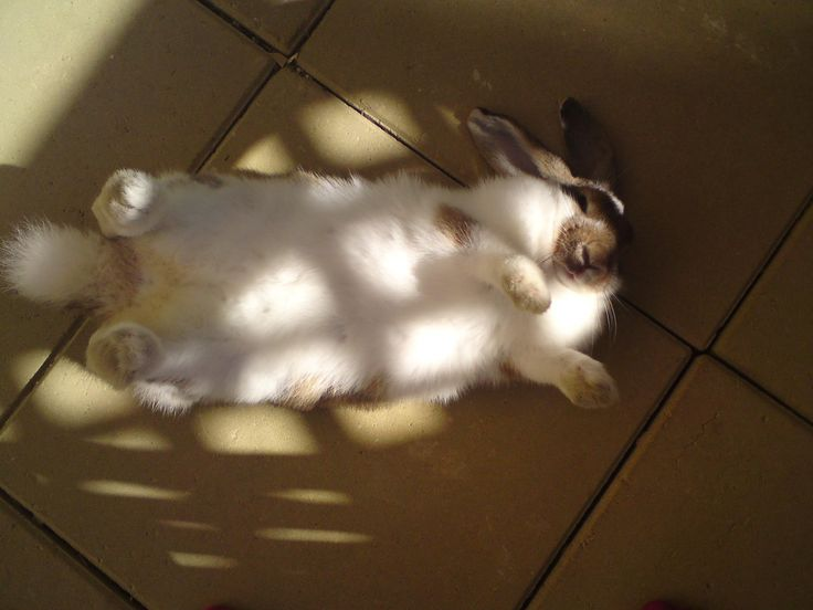 Floppy our mini lop playing . Wake up sleepy head
