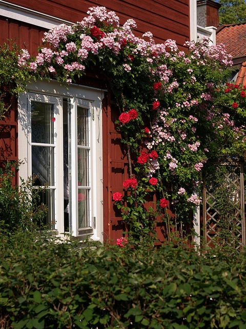The picturesque village of Sandhamn with signature red houses #Sweden @Monroeworld #Midsummer