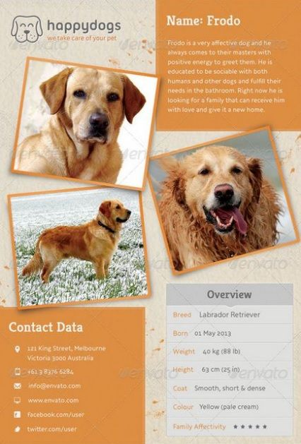 10+ Missing/Lost Pet Poster Templates Word, Excel  PDF Templates - Lost Dog Flyer Examples