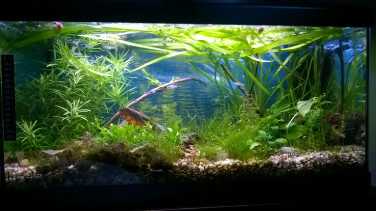 My tank, 54 l.