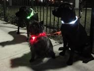 led dog collars, lighted collars
