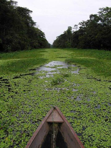 Amazon River, Brazil  Just don't tell me what's living underneath all that beautiful greenery...