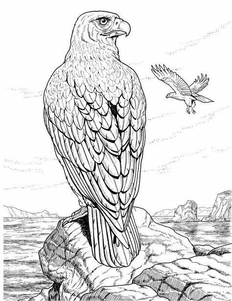 9 best eagle embroidery patterns images on pinterest drawings falcon coloring pages hawk superhero coloring pages peregrine falcon coloring page