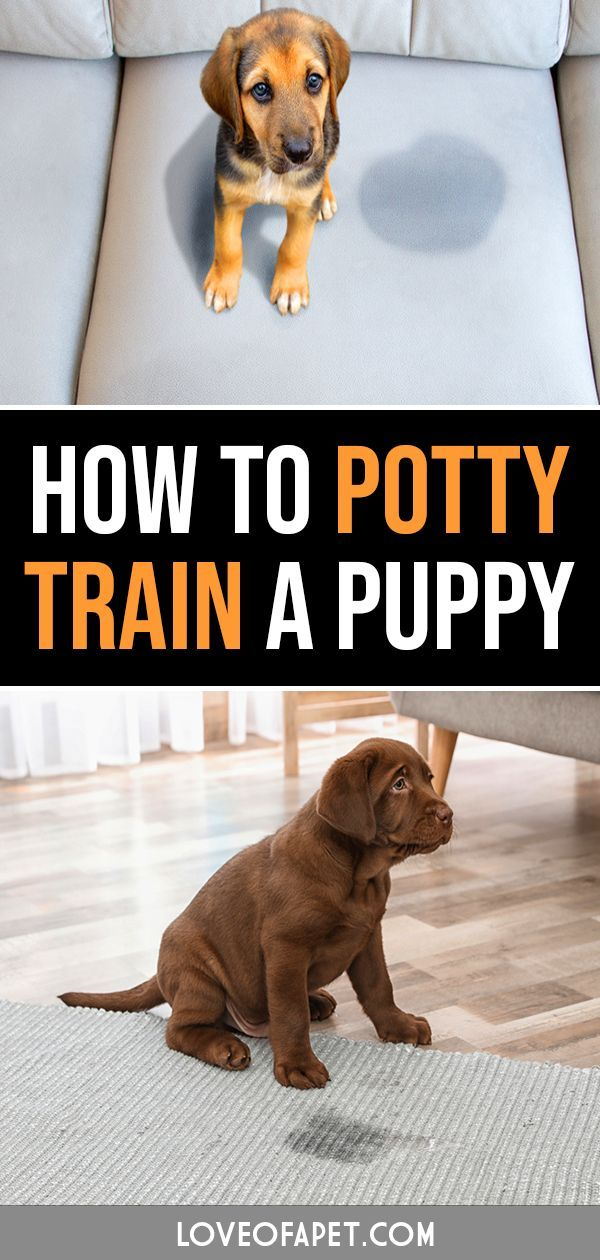 How To Potty Train A Puppy A Beginner S Guide For Dog Lovers