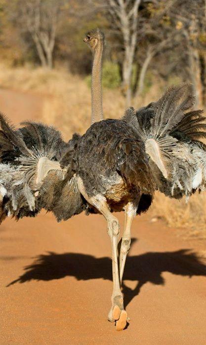 Experience Thaba Khaya http://www.thabakhayalodge.co.za/