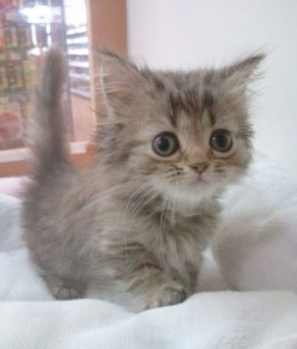 Can We Schedule Cuddle Time Cute Kittens Sopoja Elaimia Sopot