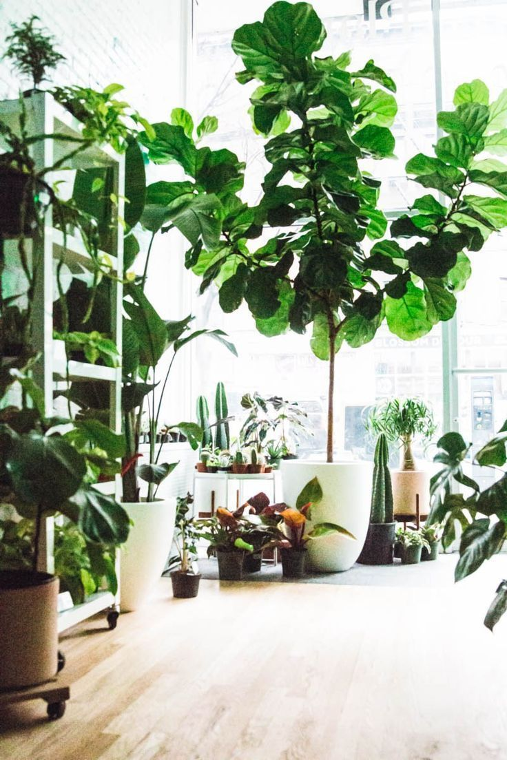 Love Indoor Houseplants For Your Living Room Learn How To Style Your Home With Blog Indoor Plants Plants House Plants Indoor