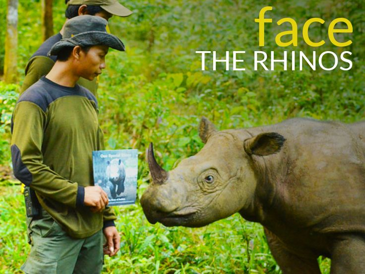 face the rhinos of dooars