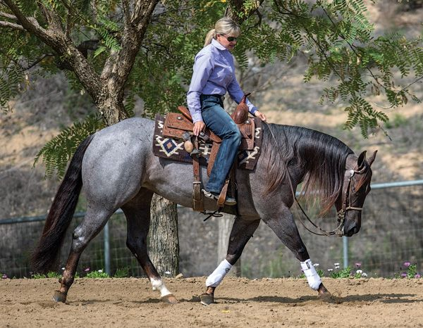 Got Fit?~Want to help keep your horse sound, physically and mentally? Get him fit to perform his job.