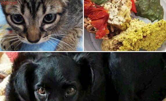 ONG Canto da Terra realiza bazar para ajudar animais resgatados em SP