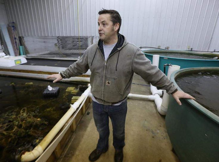 Aquaponics pioneer raising 'freshwater lobster,' year-round vegetables