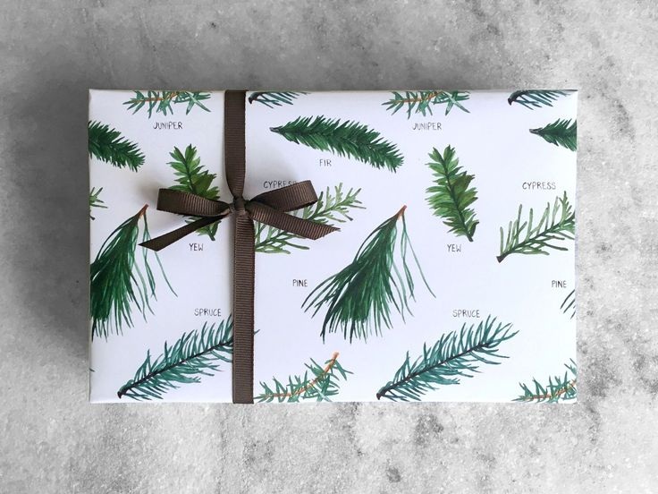 """Fine gift wrap sheets printed with original illustrations of a evergreen branches. Carefully rolled and shipped in a rigid mailing tube. • Two 20"""" x 29"""" sheets (each sheet fits a shirt box) • our own"""