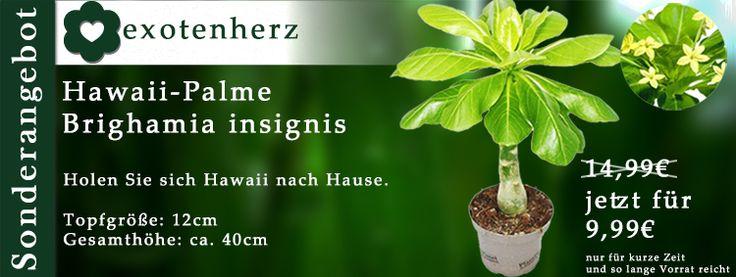 Exotenherz Shop - exotische Zimmerpflanzen für Ihre Zuhause