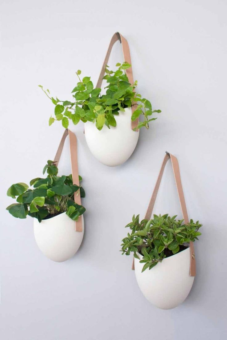 Best 25 Indoor Hanging Planters Ideas On Pinterest Hung Vs Hanged Baskets And Plants
