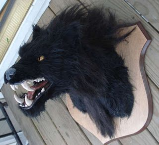 get a werewolf halloween mask- fill it with expanding foam and mount it to a wooden plaque