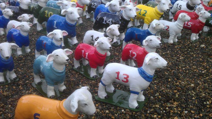 A flock of sheep wandering through the Brick Bay Sculpture Walk in Matakana.