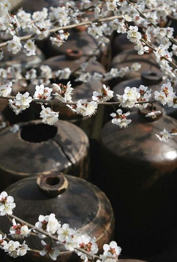 A series of traditional urns are stored underneath the cherry blossoms.