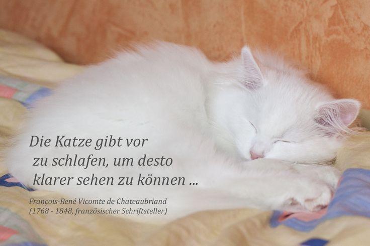 Katzen schlafen?