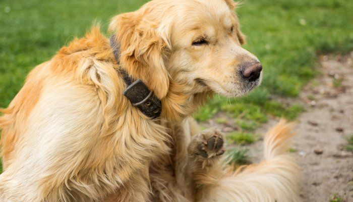 best flea and tick treatment for dogs