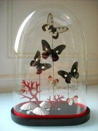 WC - Pour le cabinet de curiosité : cloche avec coquillages & papillons