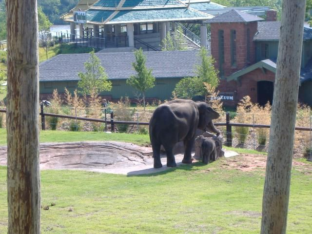 13 Places You Have to Take Your Kids in the Oklahoma City Area: The Oklahoma City Zoo