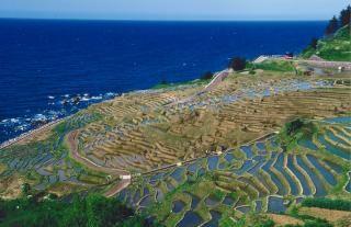白米千枚田(石川県)