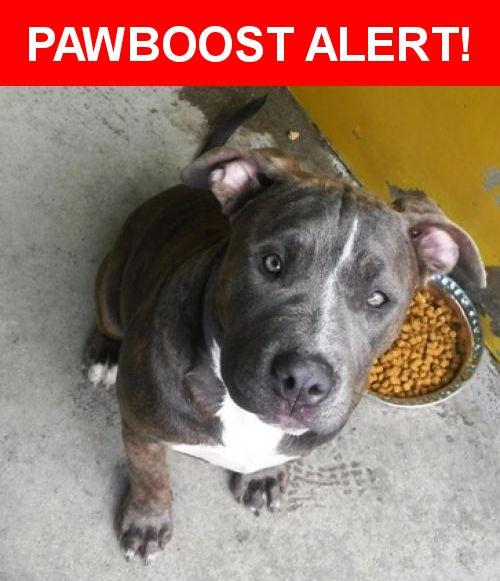 Please spread the word! Sadie was last seen in Redding, CA 96003.    Nearest Address: Near California-Market Aly & Yuba St
