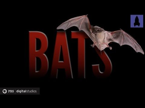 Bats: Wonders of the Night - YouTube Great overview of bats as a species to be shown before delving into echolocation